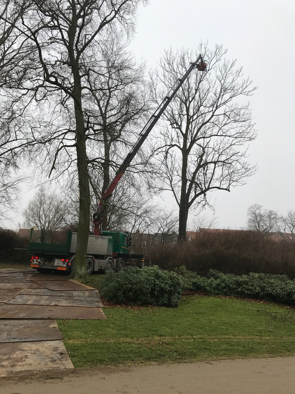 Superbly Træfældning i Slagelse   Fældning af træer i Sorø & Korsør   Få EX07